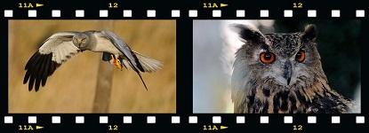 Bannière Mes photos nature, Michel Fernandez