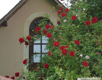 Château de M. Hubert et ses rosiers en fleurs