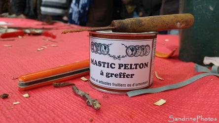 Démonstration de greffe sur table avec les Croqueurs de pommes de la Vienne. Mastic Pelton à greffer, Greffes effectuées par Francis Mignière, Médiathèque de Verrières 86 Sud-Vienne (31)