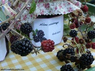 Gelée de mres sauvages faite maison aot 2011 (7)