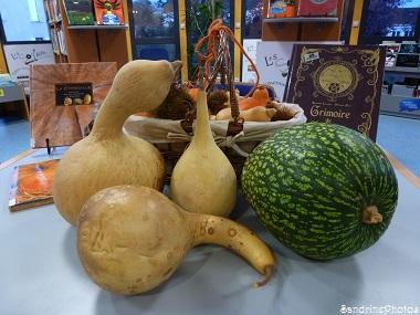 Gourdes pélerines et courge du Siam, Cucurbitacées, Potirons (5)