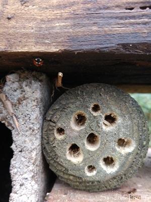 Hôtel à insectes, abri pour les petites bêtes du jardin, Le Verger, Refuge LPO Bouresse 86 (1)