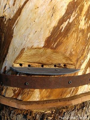Installation d`une ruche tronc au Verger, plateforme d`envol, Refuge LPO Bouresse 86 (3)