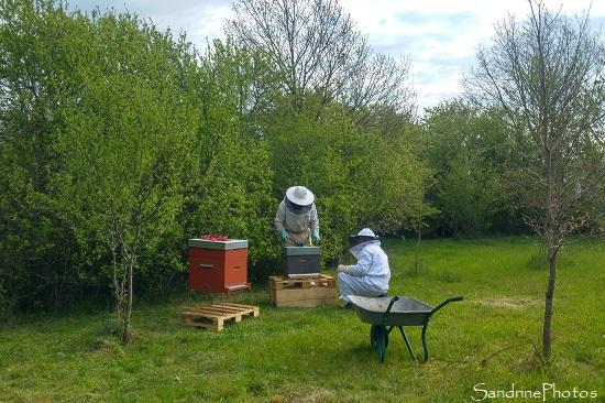 Installation de la ruche n1, Apiculture, Le Verger, Bouresse, Sud Vienne (13)