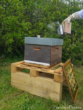 Installation de la ruche n1, Apiculture, Le Verger, Bouresse, Sud Vienne (14)