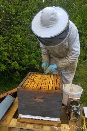 Installation de la ruche n1, Apiculture, Le Verger, Bouresse, Sud Vienne (15)