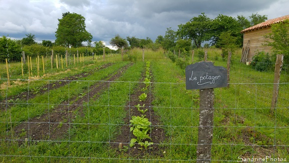 Jardin Potager, Vegetables, Garden, Refuge LPO le Verger, Bouresse, Sud-Vienne 86 (8)