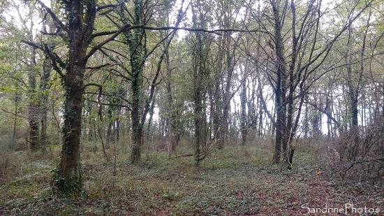Les Cubaux, Bois protégé, refuge LPO, Queaux (136)