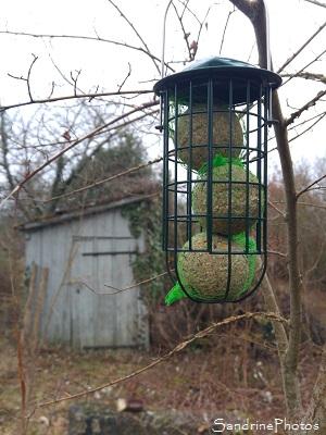 Mangeoires à oiseaux, Boules de graisse, Jardin, Refuge LPO Le Verger Bouresse 86410, décembre 2017 (7)
