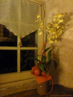 Orchidée sur toile, Orchids on canvas, plantes d`intérieur, Indoors plants, Bouresse, Poitou-Charentes