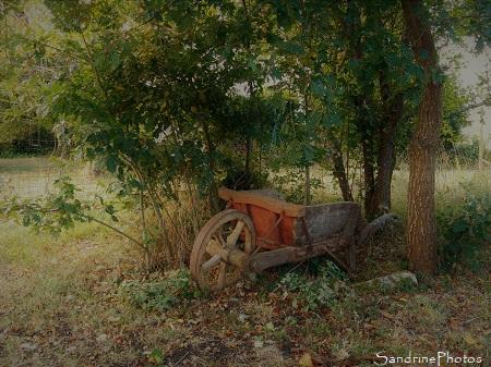 Paysage d`automne, Ancienne brouette en bois sous un bosquet de chênes, Bouresse, Refuge LPO le Verger, Biodiversité du Sud-Vienne (71)