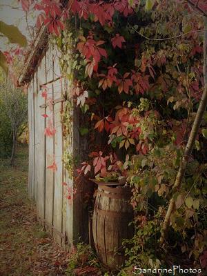 Paysage d`automne, Cabane de jardin et vigne vierge aux feuilles rouges, Bouresse, Refuge LPO le Verger, Biodiversité du Sud-Vienne (67)