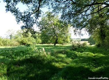 Petit chemin à Villemblée, Little path leading to the village of Villemblée-Bouresse, Poitou-Charentes