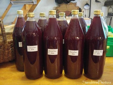 Pressage et pasteurisation du jus de Baco, raisin variété ancienne, Le Verger, Bouresse, Sud-Vienne (8)