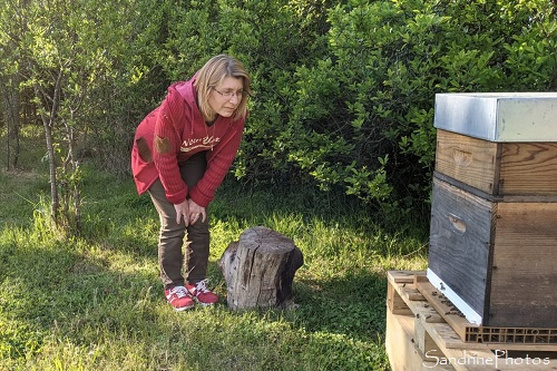 Sandrine Berthault au rucher du Verger, Bouresse, Apiculture, colonie d`abeilles, Ruches