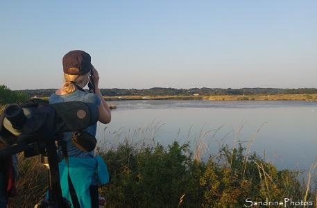 Sortie crépusculaire avec la LPO dans les marais salants de Guérande, Observation des oiseaux marins et des marais, La Turballe, Loire-Atlantique (9)