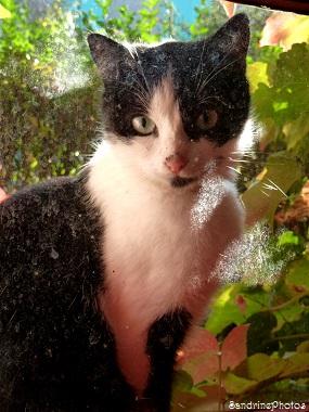 Un chat derrière le carreau, a cat behind the window, animaux domestiques, pets, Bouresse, Poitou-Charentes