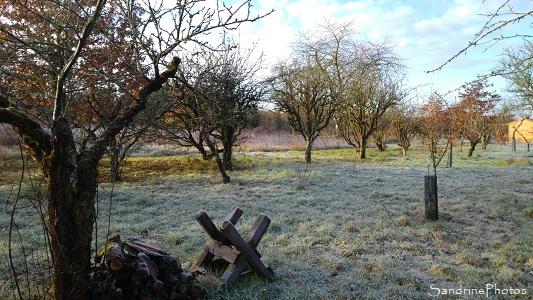 Vieux verger, arbres fruitiers, Jardin, Le Verger, Refuge LPO Bouresse, Sud-Vienne, Nouvelle Aquitaine (83)